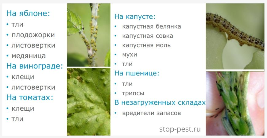 "Назначение инсектоакарицида ""Алиот, КЭ"""