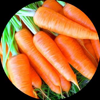 Морковь - изображение круг