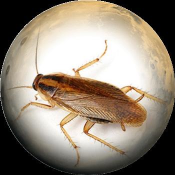 Таракан изображение