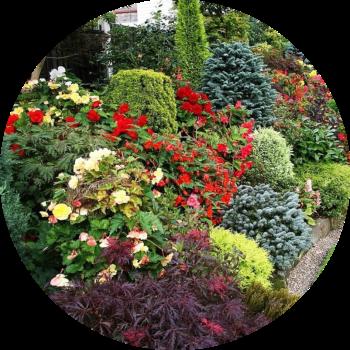 Хвойники и декоративные растения открытого грунта, изображение