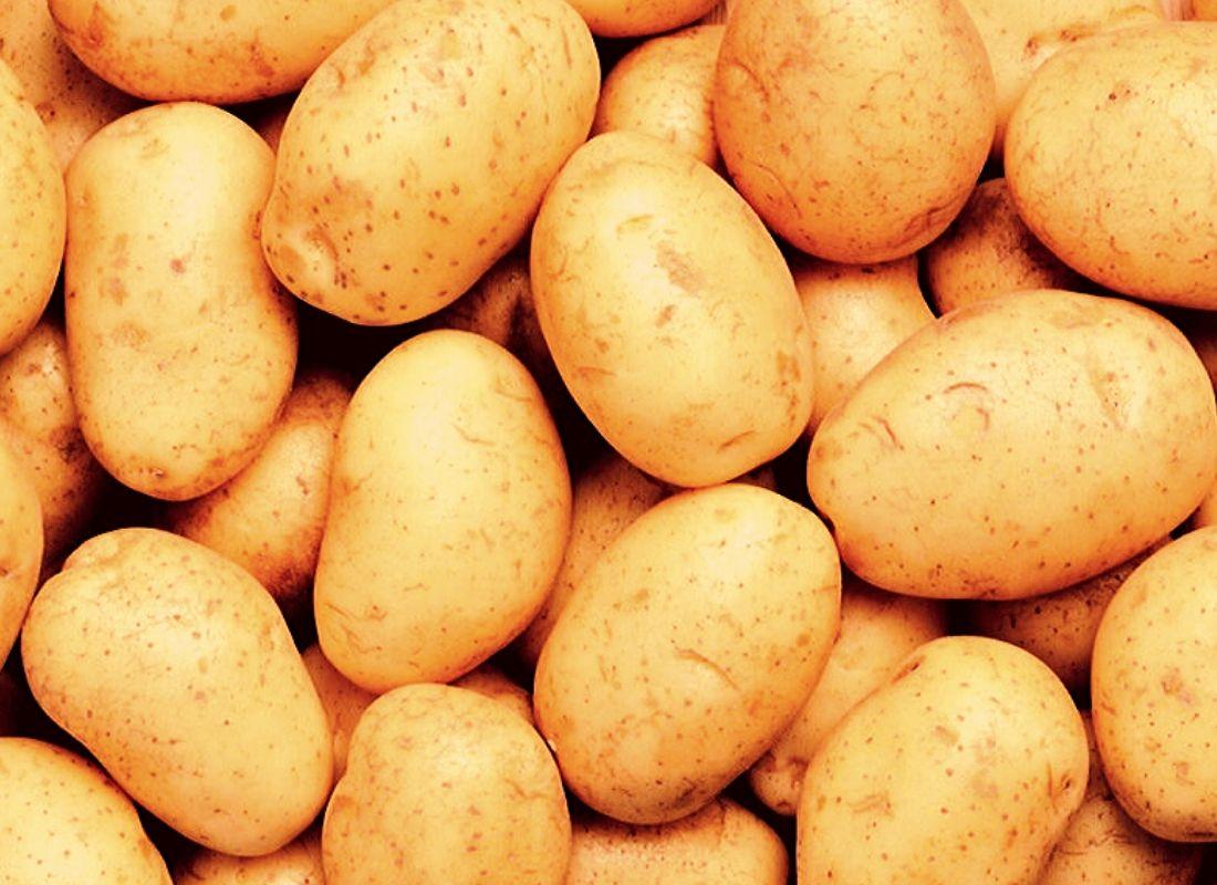 Картофель - изображение