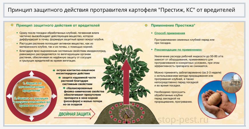 "Принцип защитного действия от вредителей протравителя ""Престиж, КС"""