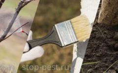 Весенняя подготовка сада - пошаговый план