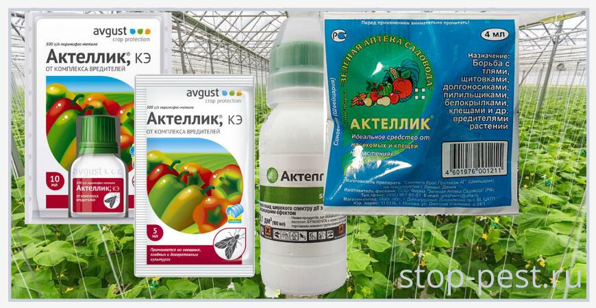 Применение «Актеллик, КЭ» на овощных культурах защищенного грунта