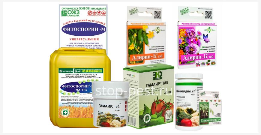 Примеры биофунгицидов для дезинфекции почвогрунта