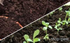 Обеззараживание почвы перед высевом семян и высадкой рассады