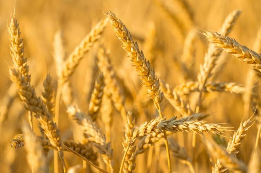 Зерновые изображение