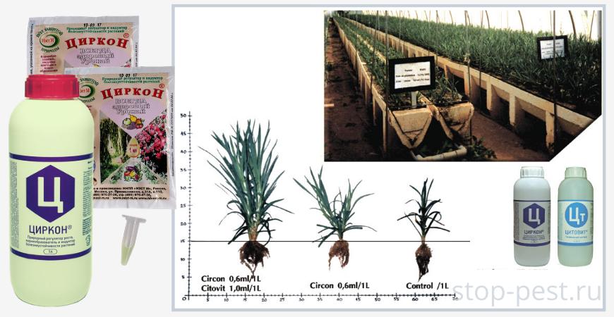 """Преимущества использования регуляторов роста, на примере препарата """"Циркон"""""""