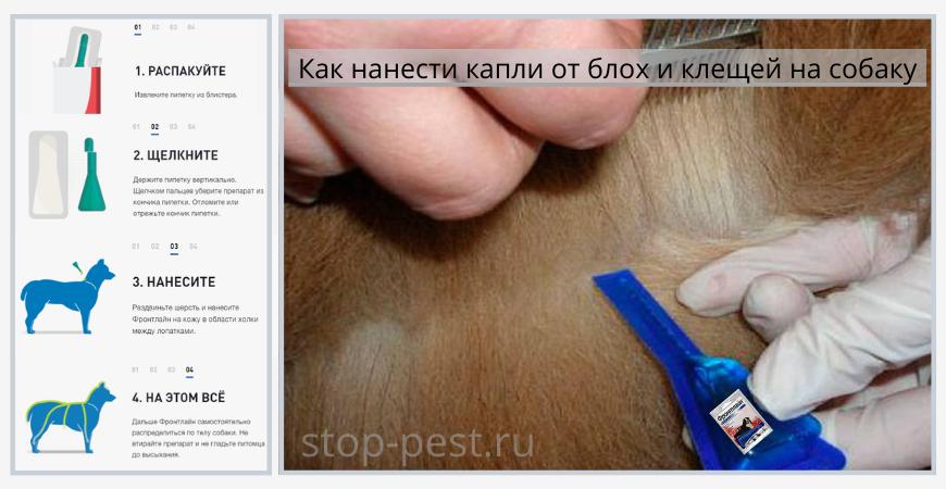 Как нанести капли от клещей для собак