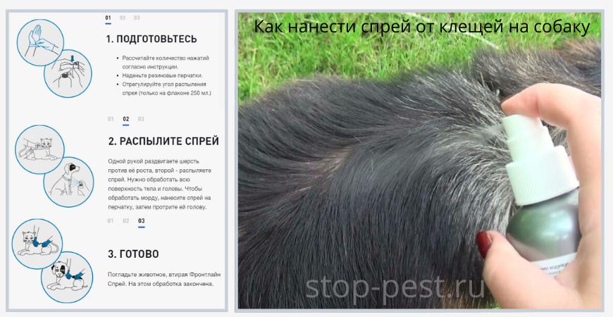 Как нанести инсектоакарицидный спрей от блох и клещей для собак