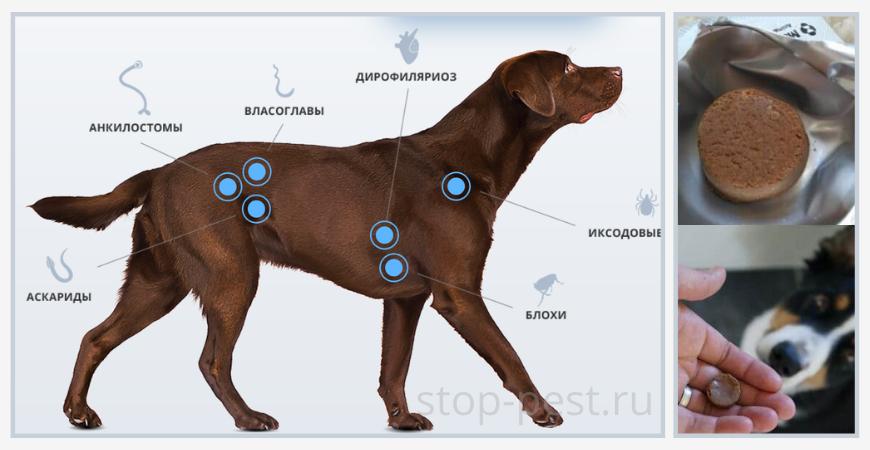 Назначение таблеток от клещей для собак