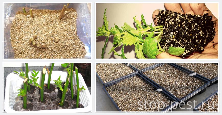Способы применения вермикулита в растениеводстве