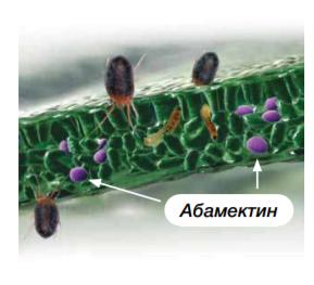 Вермитек (абамектин). Механизм действия