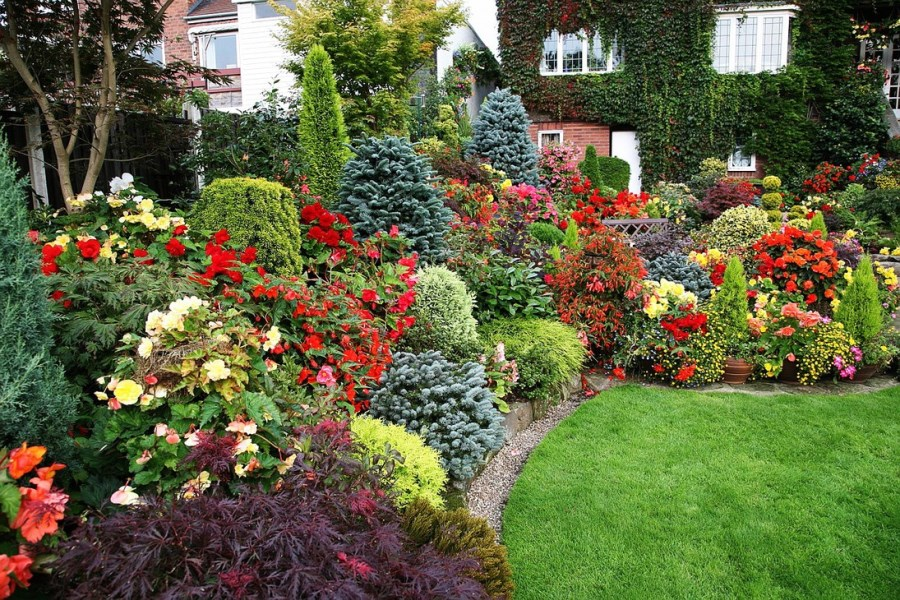 Хвойники и декоративные растения - изображение