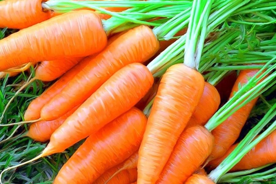 Морковь - изображение