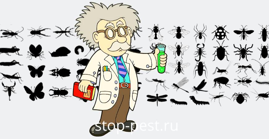 Лучшие инсектициды