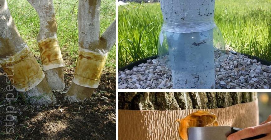 Сухие, масляные, отпугивающие, инсектицидные пояса для деревьев