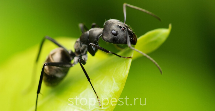 Избавиться от муравьев на участке - 3 способа