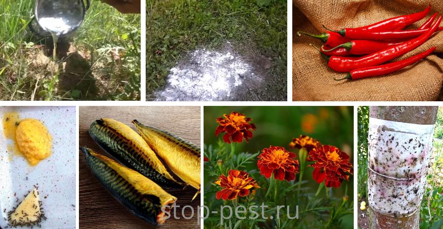 «Народные» способы избавиться от муравьев на участке