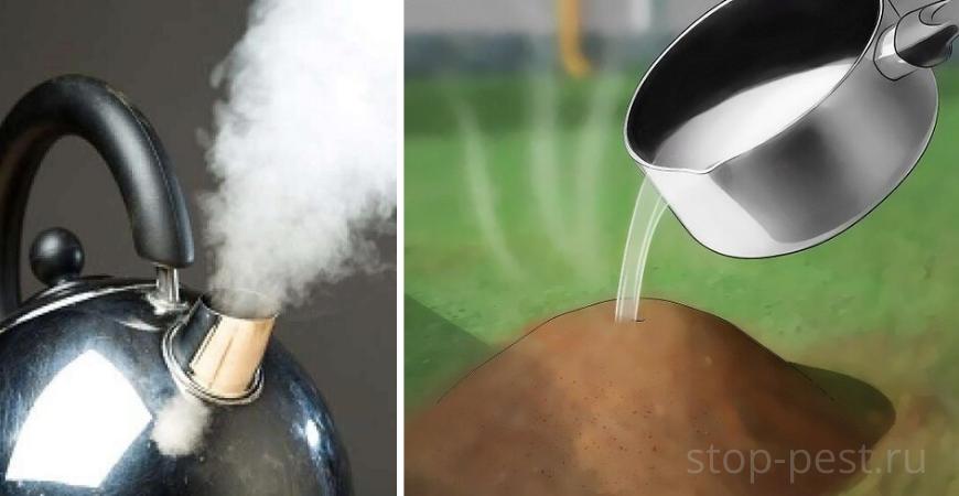 Использование кипящей воды для борьбы с муравьями