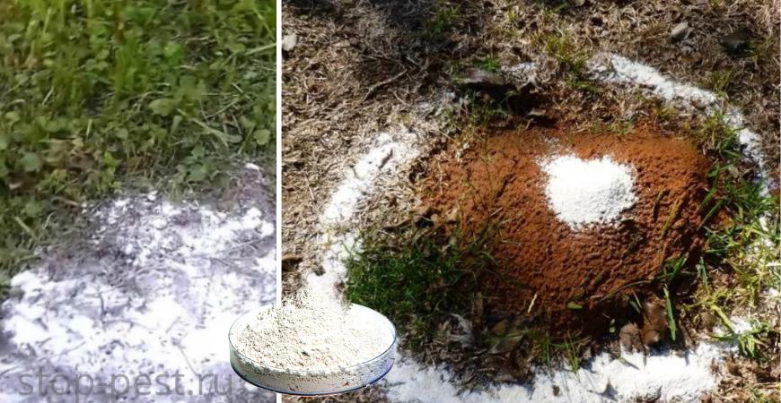 Использование соли или извести для борьбы с муравьями