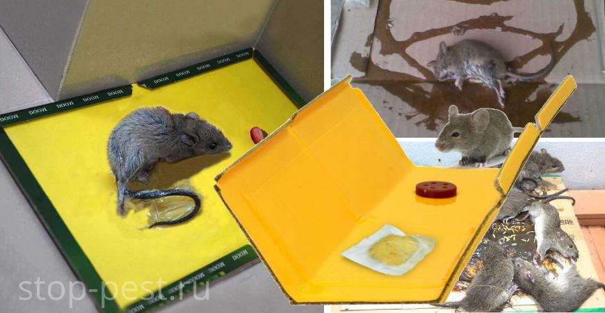 Клеевые ловушки от грызунов