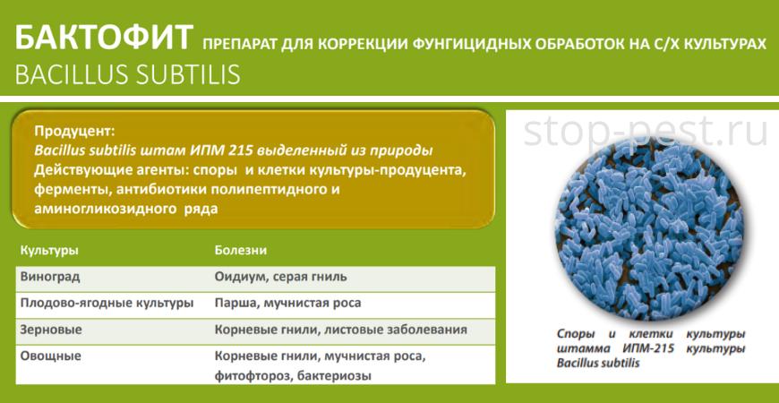 Бактофит - биофунгицид и бактерицид