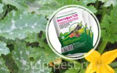 Бактофит - биофунгицид от грибных и бактериальных заболеваний
