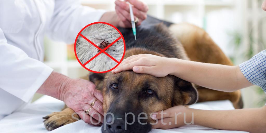 Вакцинация собаки - профилактика укуса клеща