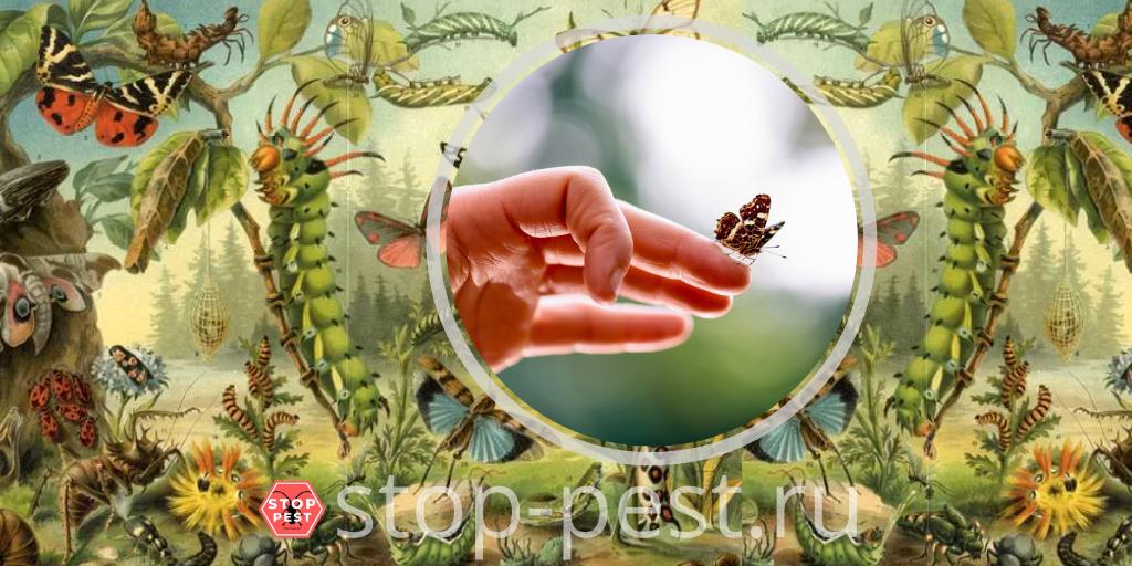 Сколько насекомых живет на Земле