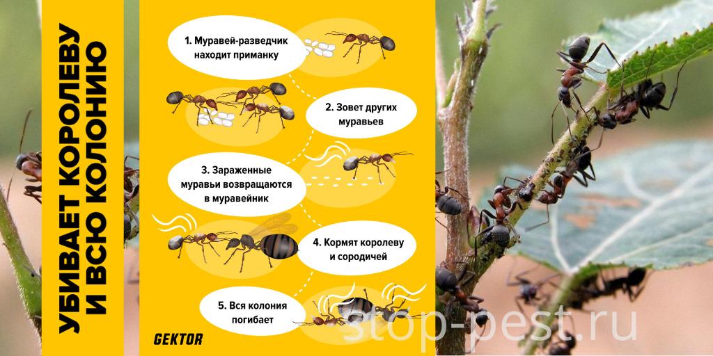 """Механизм действия препарата """"ГЕКТОР - порошок от муравьев"""""""