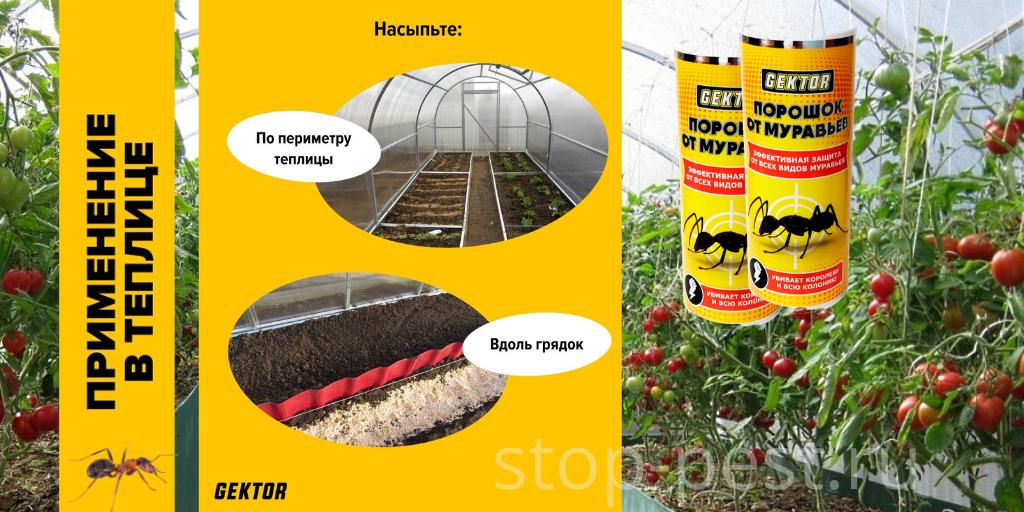 "Применение препарата ""ГЕКТОР от муравьев"" на защищенном грунте"