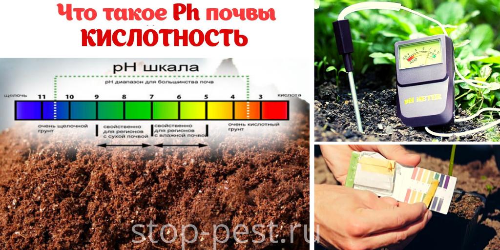 Кислотность почвы, что такое, как проверить
