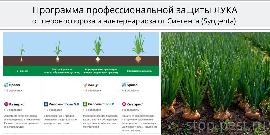 Программа защиты лука, Сингента (Syngenta AG)
