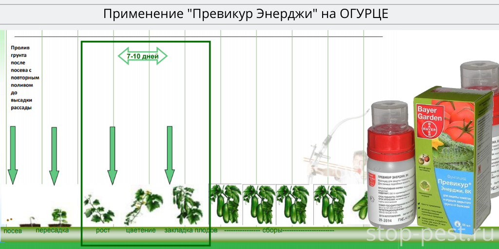"Регламент применения фунгицида ""Превикур Энерджи"" на огурце"