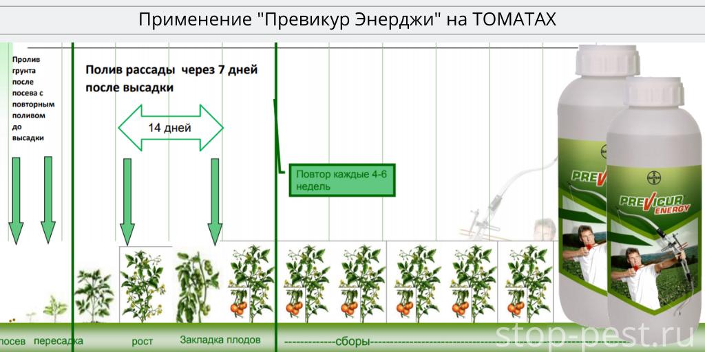"Регламент применения фунгицида ""Превикур Энерджи"" на томате"