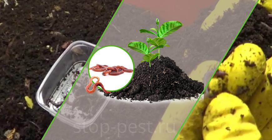 Биогумус- как правильно использовать (состав, нормы применения, формат выпуска и пр.)