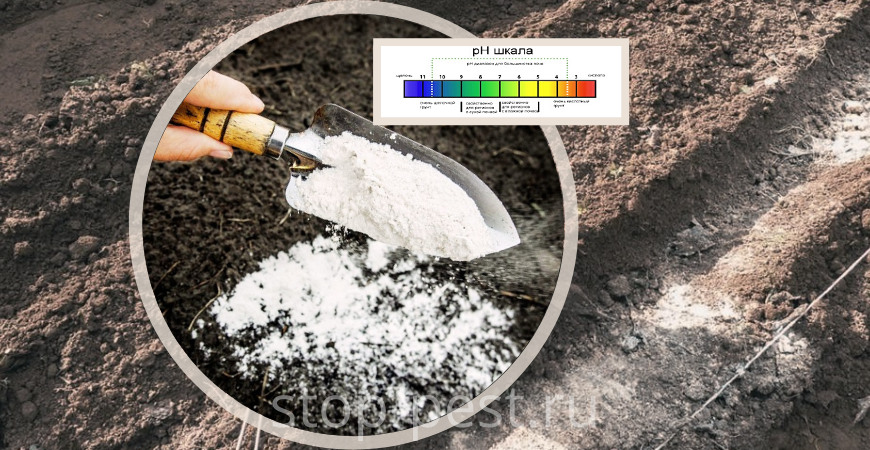 Раскисление почвы (как определить, чем и как раскислять)