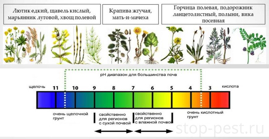 Показатели pH почвы и растения-маркеры для определения кислотности почвы